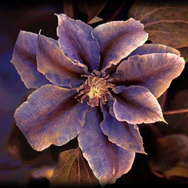Manipulation of flower picture.