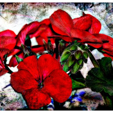 Manipulated flowers picture.