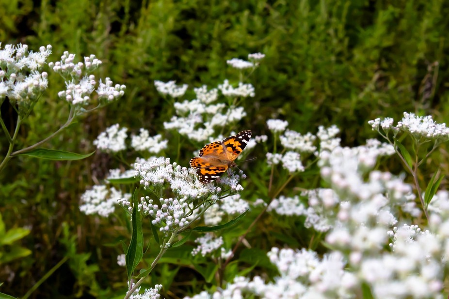 Butterfly at Pelham Bay Park in The Bronx