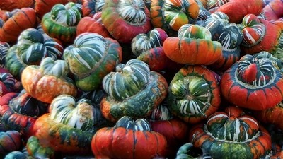 Turks Hat Pumpkins