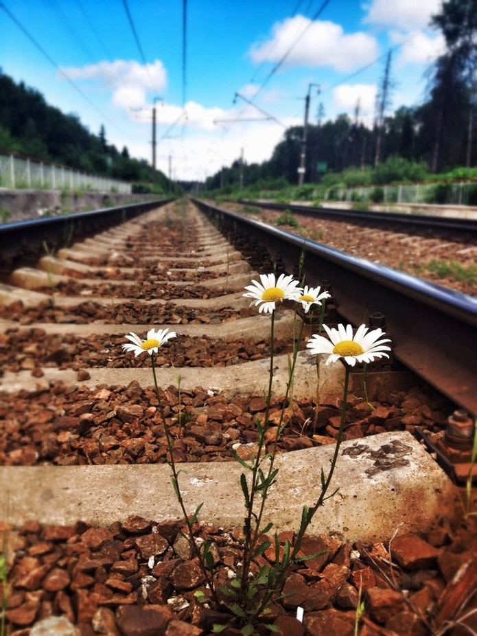 flower by the railroad by RLariza - Empty Railways Photo Contest