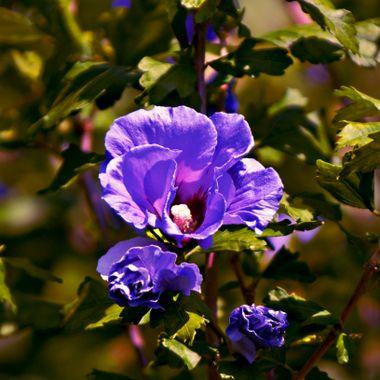 Violet coloured flowers.