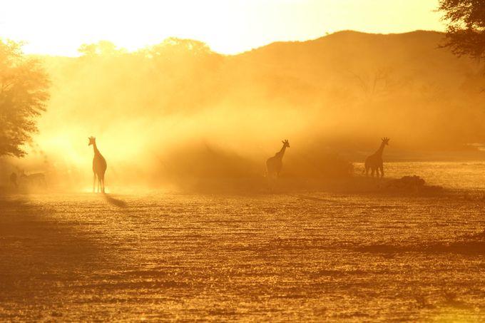 Dust at dawn. by Retnev60 - Dusty Photo Contest