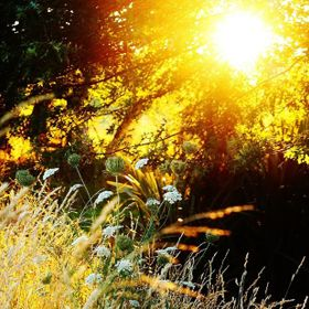 Beautiful golden morning sun shining through the trees canopy lighting up the grass and wild flowers