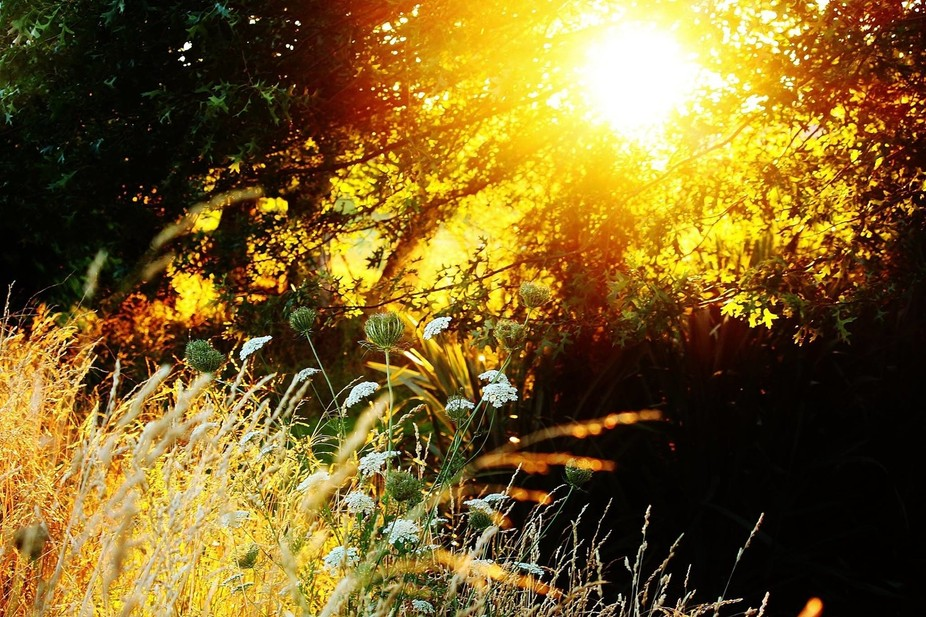 Beautiful golden morning sun shining through the trees canopy lighting up the grass and wild flow...