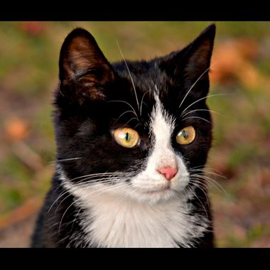 A black and White pet cat.
