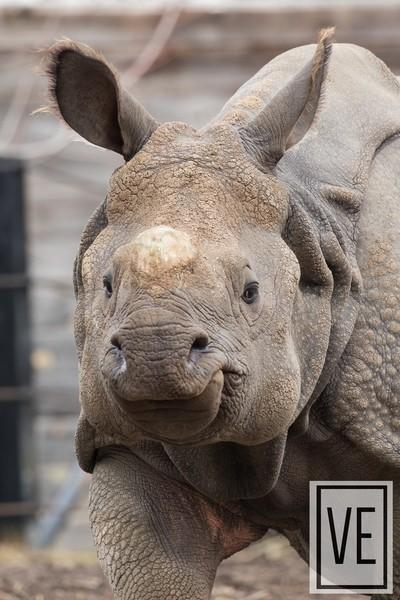 Rhino Selfie!