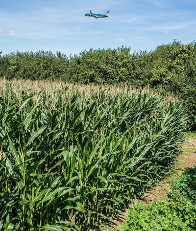 Vietnam Airlines climbs out of London Heathrow from a corn field