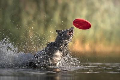 Catching...