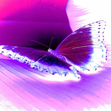 Vibrant Purple Butterfly