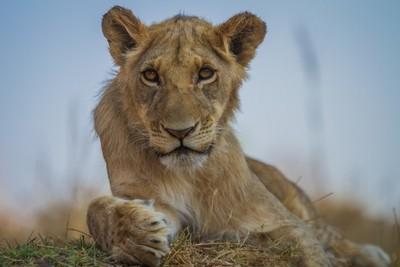 A beautiful male cub