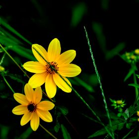A bright yellow wildflower shows off it's beauty.