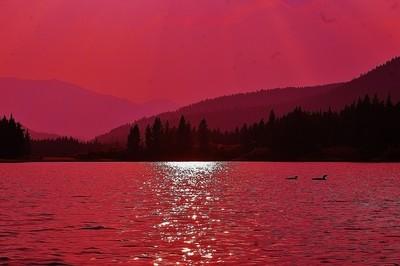 11523  Forest Fire Sunset