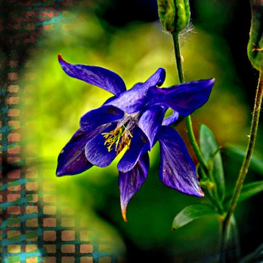 very nice flower.