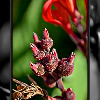 An unusual plant / flower.