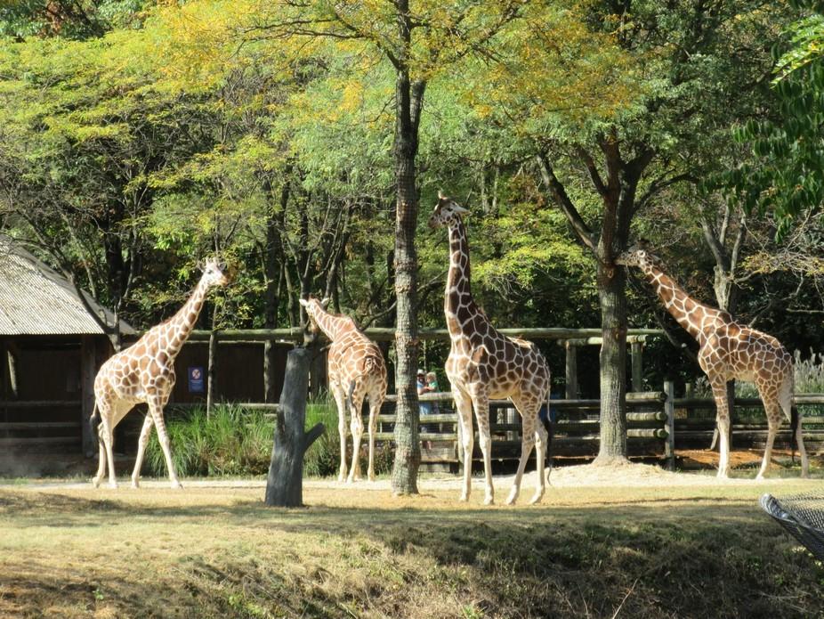 giraffe squad