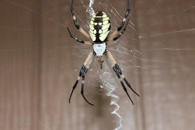Spider n its web