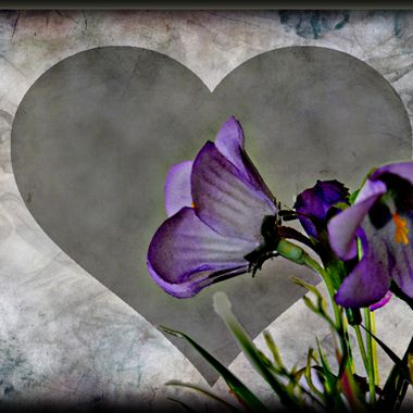 Flower manipulation photo with a heart.