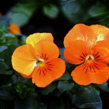 Orange flowers close up.