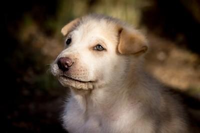 Morning Pup