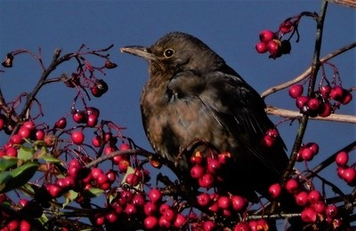 Sparrow,