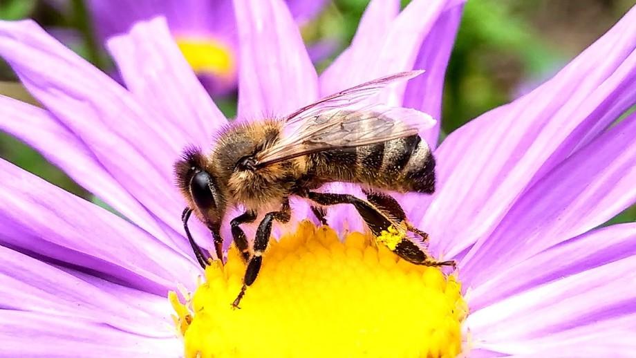 My favorite bee