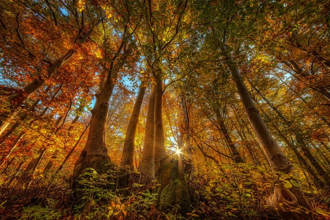 Woods of Gorski Kotar by pujdo - Flares 101 Photo Contest