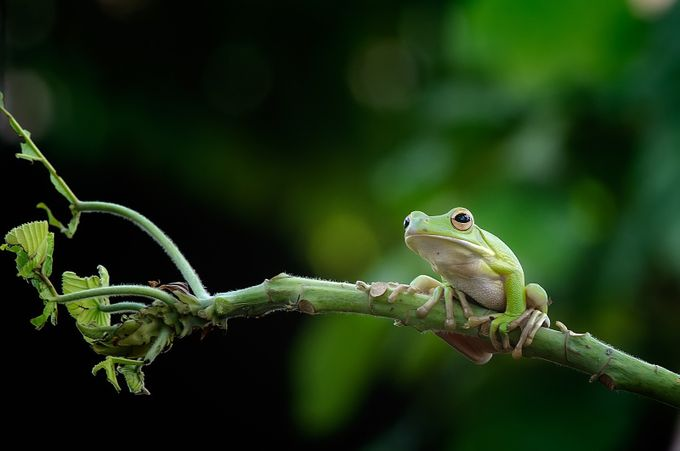 FROG by ricosajoo - Macro Games Photo Contest