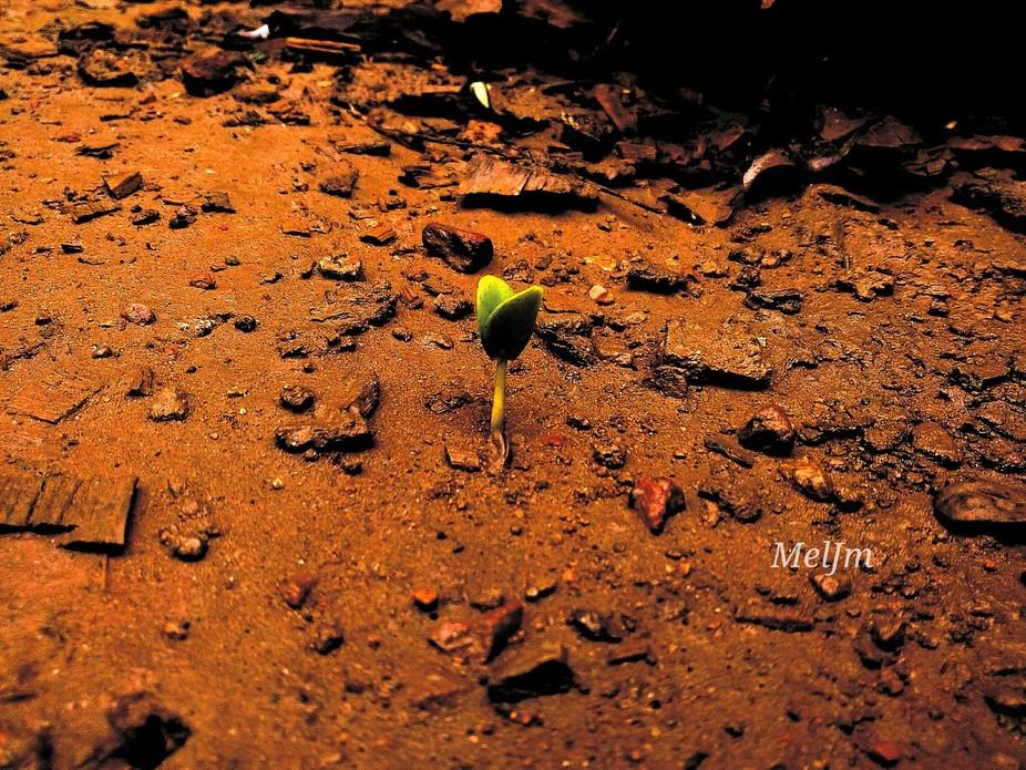 A new plant Sapling emerging