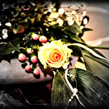 Single yellow rose photo.