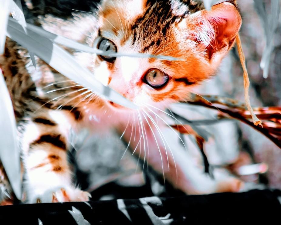 #kitten #playing