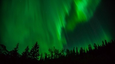 Northern Lights over the trees