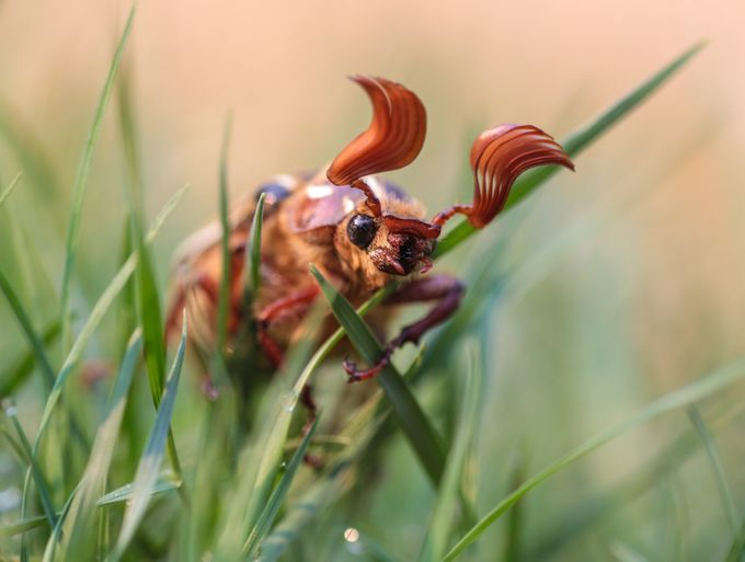 Everything Insects Photo Contest Winners