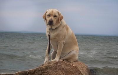 My Pal at the Beach