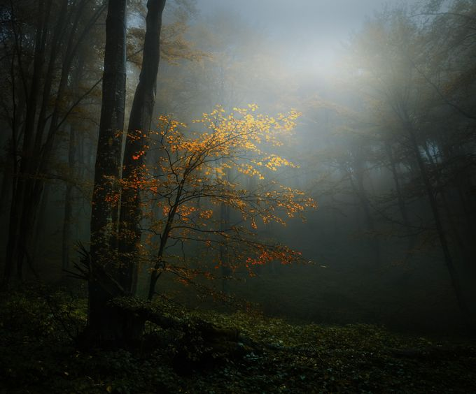 The Wet Forest by swqaz - Monthly Pro Vol 35 Photo Contest