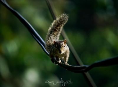 squirrel best