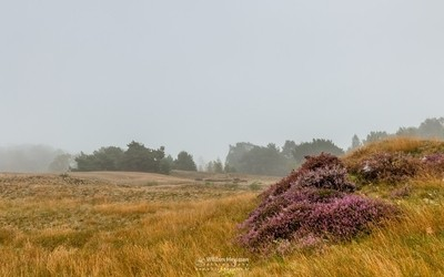 Misty Heather View
