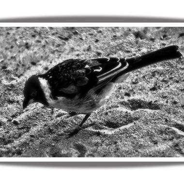 A little bird done in monochrome.