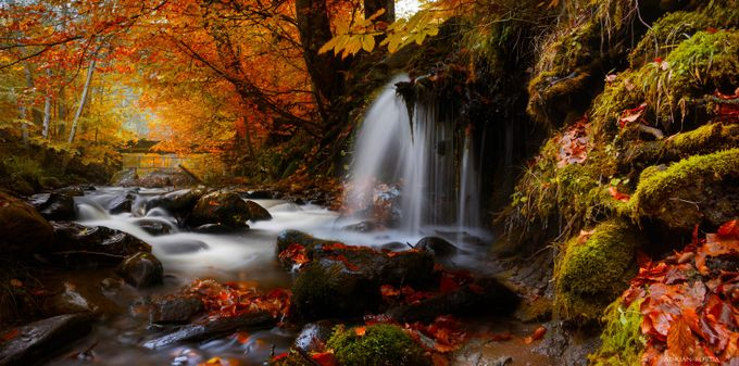 I swear I left her by the river by adrian-borda - Image Of The Month Photo Contest Vol 26