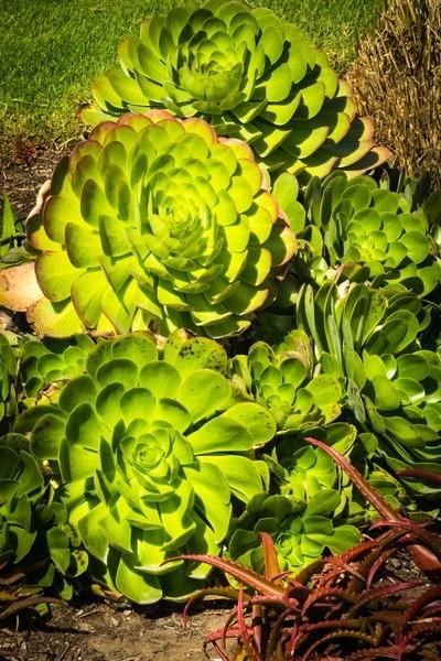 Newport Cactus #3