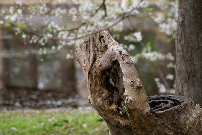 Log Seat and Blossoms