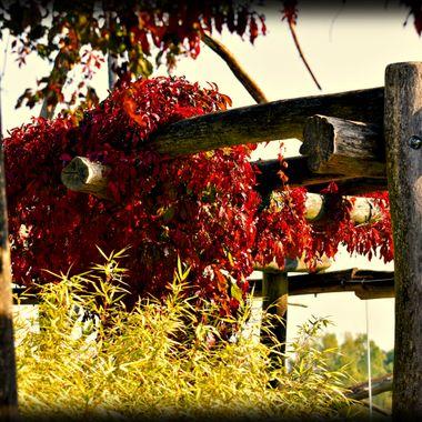 Hanging plants on a framework.