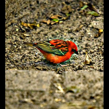 Brightly coloured tiny bird.