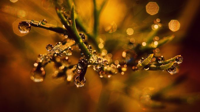 Autumns little touches by storyofmylife - Macro Water Drops Photo Contest