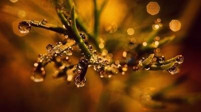 Autumns little touches