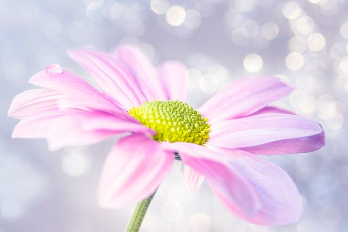 9N4A8430-2 by Anneliese-Photography - Everything Bokeh Photo Contest