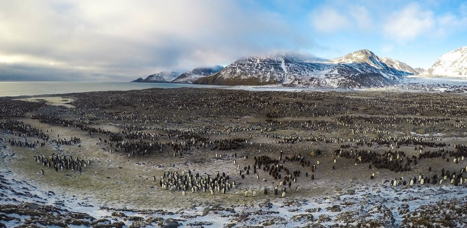 The King penguin colony at St. Andrews Bay, South Georgia is one of planet's most specta...