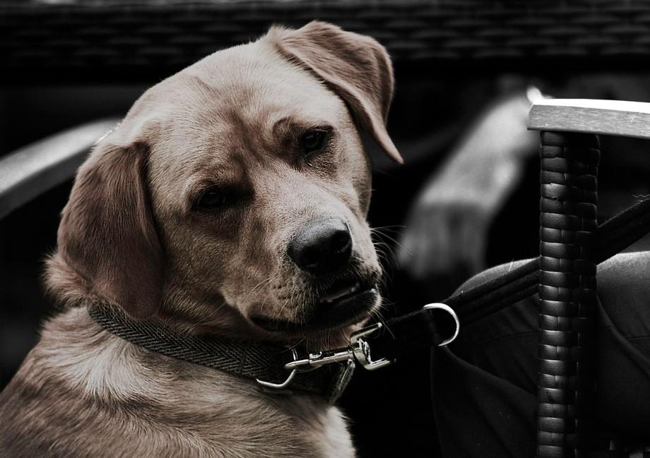 Quizical dog
