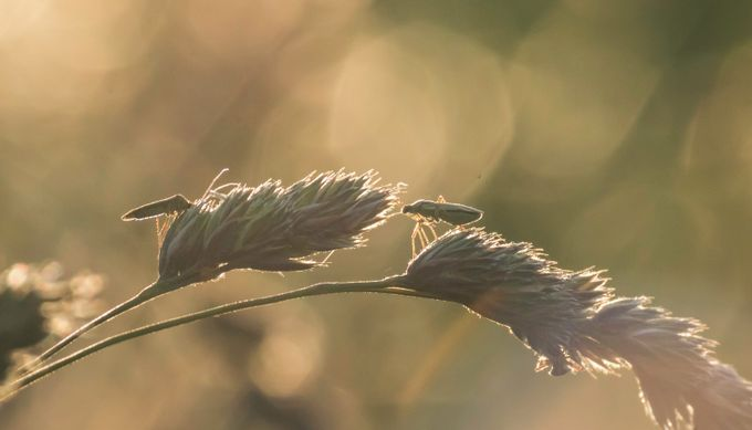 The Little Guys In The Morningsun by markusfiedler - Everything Bokeh Photo Contest