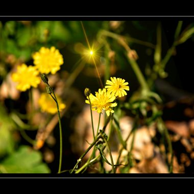 Manipulated flowers photo.
